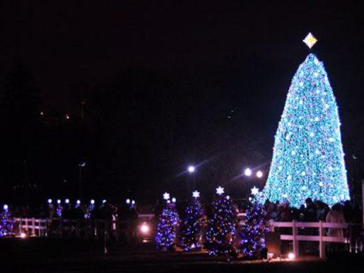 L'albero di Natale più alto d'Europa è campano