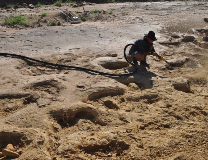 Gigantesche impronte di dinosauri salvate dall'inondazione del Queensland